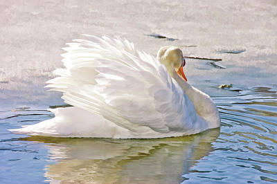 White Swan Art Print by Elaine Manley