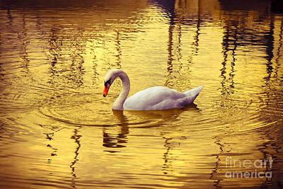 White Swan In Golden Background Art Print