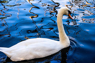 Photograph - White Swan In The Reflective Water by Jenny Rainbow