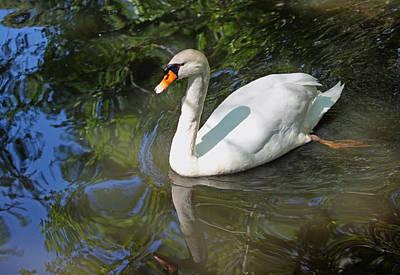 White Swan V Original