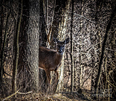 Photograph - White Tail Deer Between Trees by Ronald Grogan