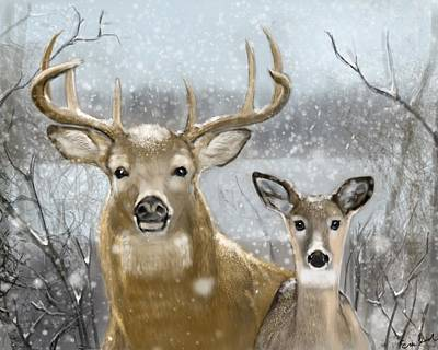 White Tail Winter Art Print by Eric Smith