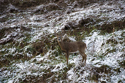 Digital Art - White Tailed Deer Almost Perfect Camouflage  by Chris Flees