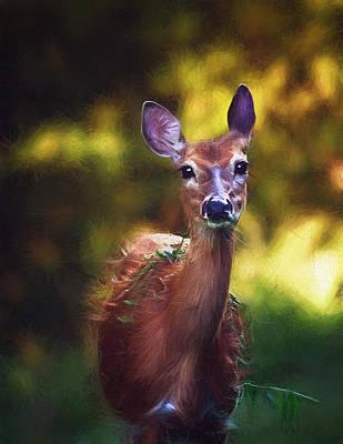 White-tailed Deer - Deer - Doe - Wildlife Print by SharaLee Art