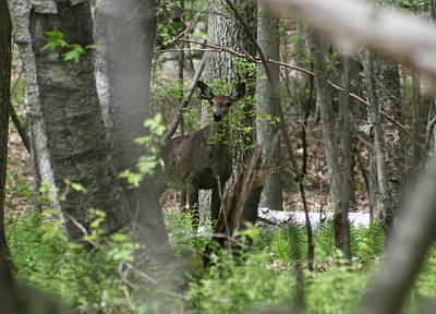 Photograph - White Tailed Deer Encounter  by Neal Eslinger