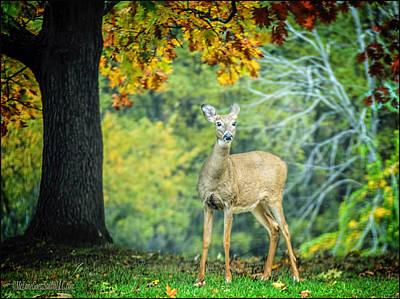 Deer Photograph - White Tailed Deer by LeeAnn McLaneGoetz McLaneGoetzStudioLLCcom