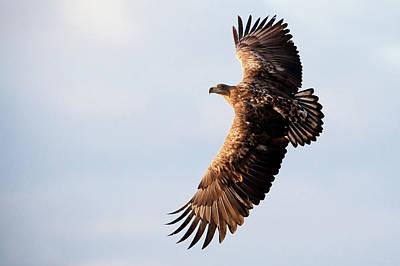 Eagle Photograph - White-tailed Eagle by Damiankuzdak