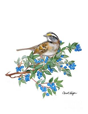 Blueberry Drawing - White-throated-sparrow by Carol Veiga