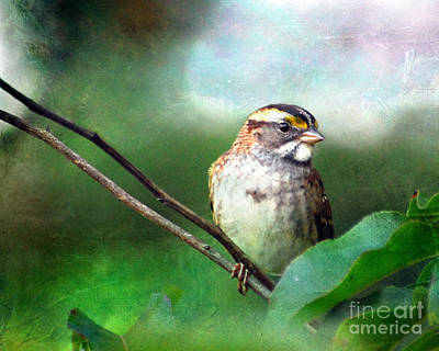 White-throated Sparrow Photograph - White-throated Sparrow by Kerri Farley