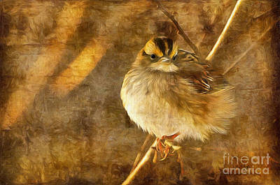 Avian Digital Art - White Throated Sparrow by Lois Bryan