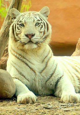 Photograph - White Tiger 8 by Rachel Munoz Striggow