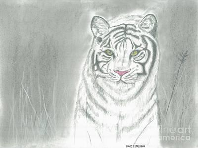 White Tiger Art Print by David Jackson