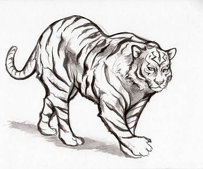 Drawing - White Tiger by Miguel Karlo Dominado