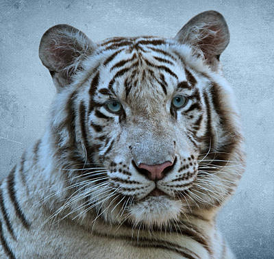 White Tiger Print by Sandy Keeton