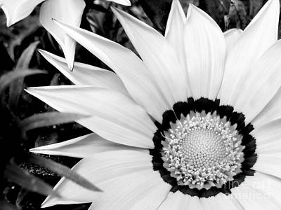 Photograph - White Treasure Flower by Ioanna Papanikolaou