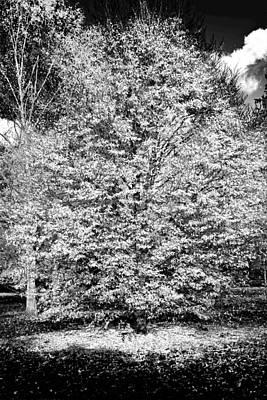 Mannequin Dresses - White Tree by Maj Seda