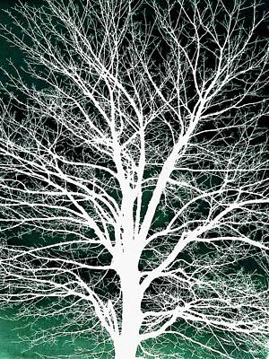 Photograph - White Tree Silhouette On Blue by Patricia Strand