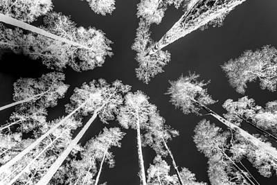 White Trees Art Print by Hakon Soreide