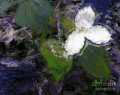 Photograph - White Trillium by Claire Bull