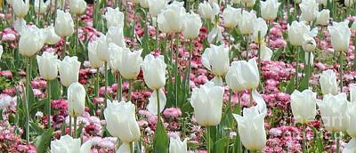 Photograph - White Tulips  by Katy Mei