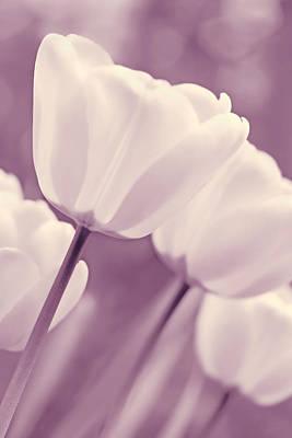 Photograph - White Tulips Purple Monochrome by Jennie Marie Schell