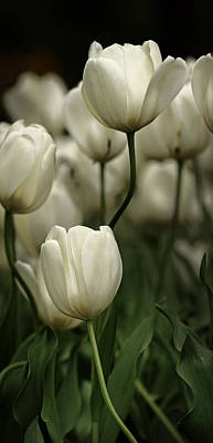 Photograph - White Tulips by Marc Huebner