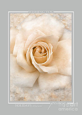 Photograph - White Vintage Rose Christmas Cards by Jai Johnson