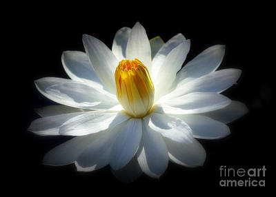 Photograph - White Water Lily by Lisa L Silva