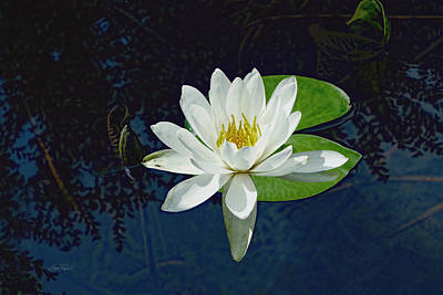 Photograph - White Water Lily by Ann Powell