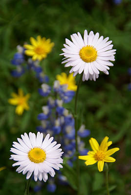 Photograph - White Wild Flowers by Robert Lozen