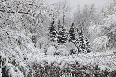 Photograph - White Winter Day by Jennifer E Doll