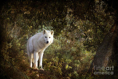 White Wolf Art Print by Angel  Tarantella