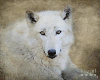 Arctic Wolf Photograph - White Wolf by Jai Johnson