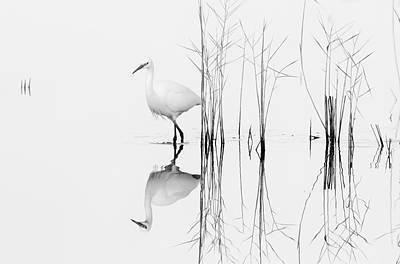 Abstract Landscape Photograph - White by Zhecho Planinski Afiap