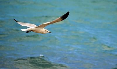 Photograph - Whitebird by Jody Lane