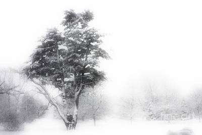 Photograph - Whiteout by Marcia Lee Jones