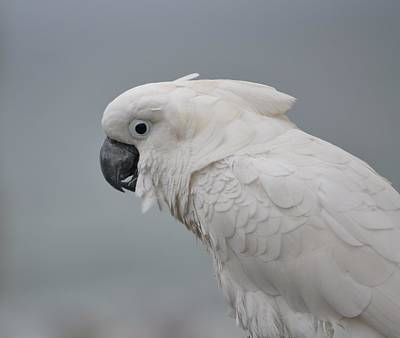 Photograph - Whitest Bird by Kiros Berhane