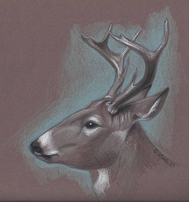 Wall Art - Drawing - Whitetail Buck Pencil by Pam Little