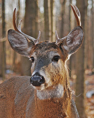 Whitetail Photograph - Whitetail Buck_1111 by Michael Peychich