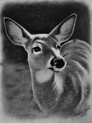 Maine Winter Drawing - Whitetail Doe by Samantha Howell