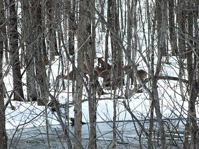 Photograph - Whitetail Huddle by Gene Cyr