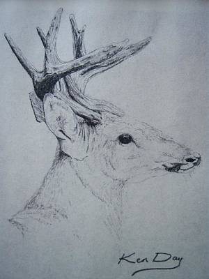 Whitetail Deer Drawing - Whitetail by Ken Day