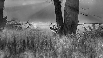 Whitetail Morning Art Print