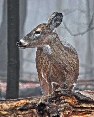 Whitetail On A Foggy Morning Art Print