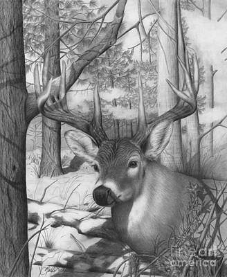 Drawing - Whitetail Phantom by Barb Schacher