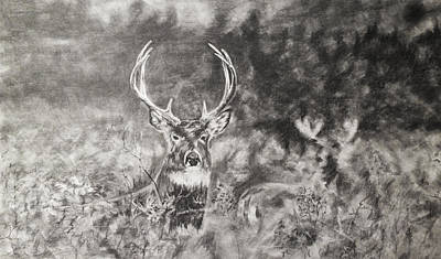 Whitetail Deer Drawing - Whitetailed Deer  by Shannon  Savage