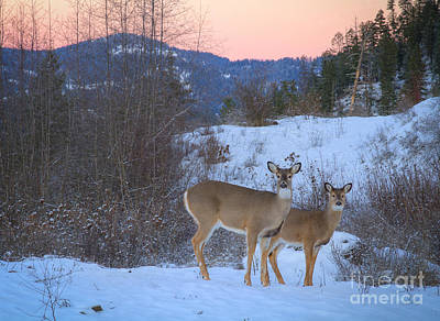 Whitetails At Dusk Print by Idaho Scenic Images Linda Lantzy