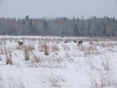 Photograph - Whitetails In Snow by Gene Cyr