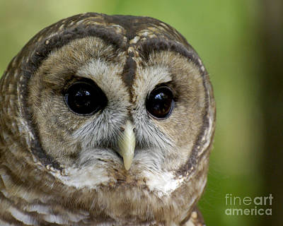 Owl Photograph - Who Are You by Liz Masoner