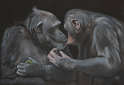 Primate Drawing - Who Gives A Fig? by Jill Parry
